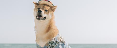 Dog with a hat in front of an ocean