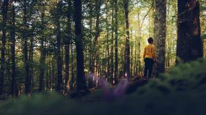Person standing in the woods